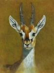 "Thompson's Gazelle  16x12""  oil (accepted into Art and the Animal Kingdom Bennington Center for the Arts, 2008) $1100"