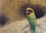 "White-fronted Bee-eater 8x10""  oil   (Private Collection)"