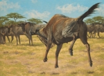 "Wildebeest Whoop-de-do 18x24""  oil  $3000"