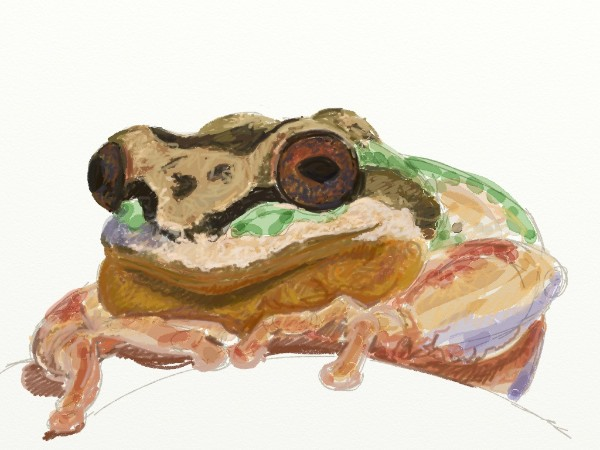 I start laying in colors with the crayon tool