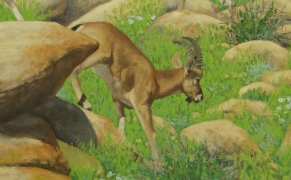 Detail; finished ibex, rocks, grass