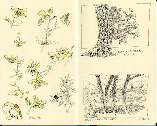 15-flowers,-elm-trees