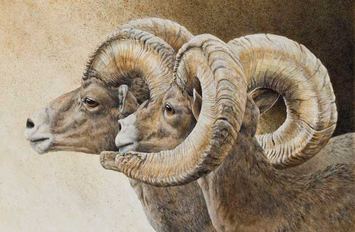 Dawn Watch: Desert Bighorn Sheep Acrylic on Clayboard
