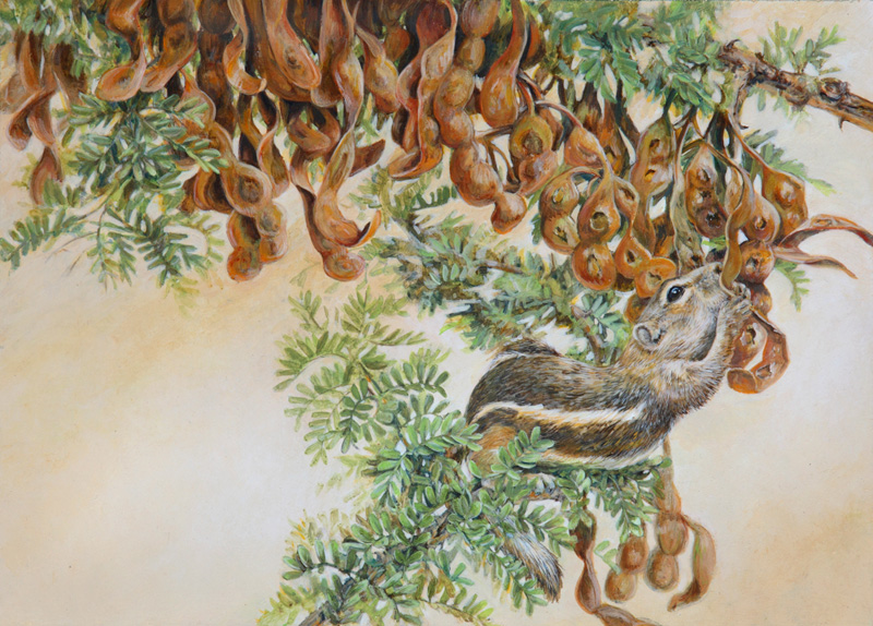 Low Hanging Fruit: White-tailed Antelope Ground Squirrel in Cat Claw Acacia Acrylic on Clayboard