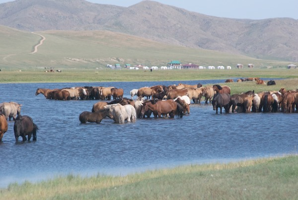 Herd of Mongol horses at Gun-Galuut Nature Reserve