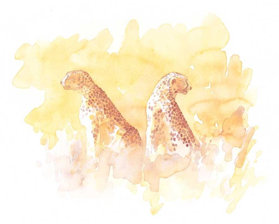 "Serengeti  Cheetahs Field Sketch, 11x14"" by Alison Nicholls"