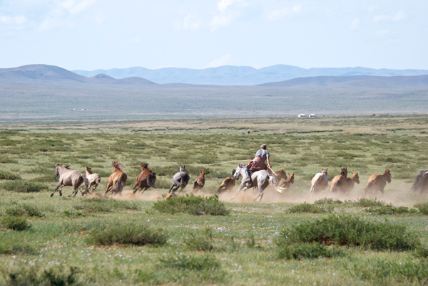 I had to make a really tough choice. I wanted to watch the wrestling, but a demonstration of catching and riding young horses had begun. The horses won out because I really needed more reference of riders using the urga (the long catchpole)
