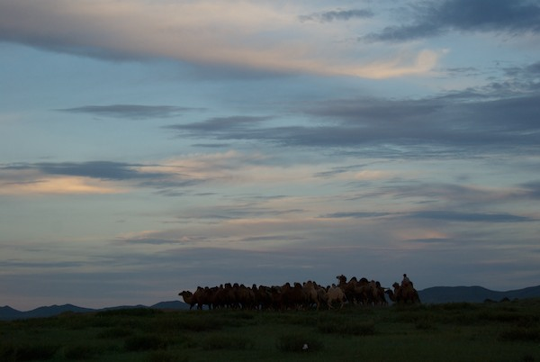 Arburd Sands sunset. With camels.