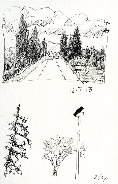 Road,-crow