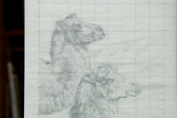 I drew a grid on a piece of tracing paper to do a traditional graphite transfer to the canvas panel