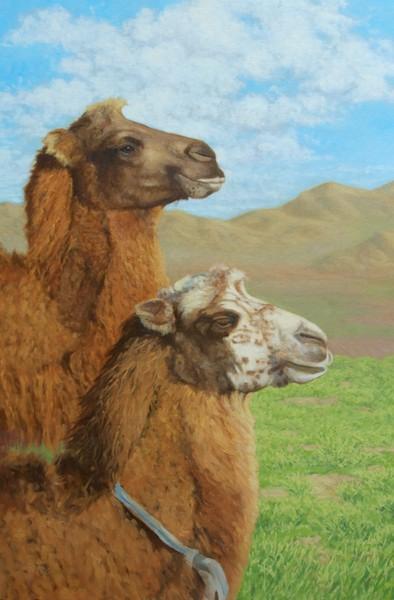 "Bactrian Camels, Bayan-Onjuul Soum, Mongolia oil  30x20"""