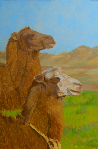 First color pass on the camels.