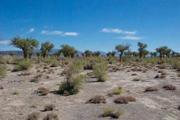 Grove of trees west of Eej Hairhan Uul