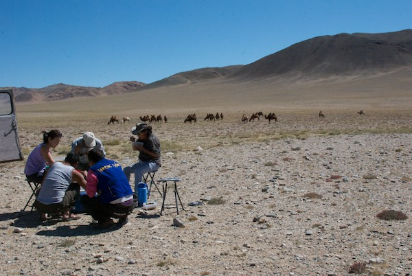 Where better to stop for lunch but near a herd of camels?