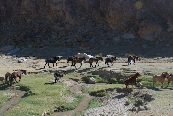 Entering a narrow valley we passed a herd of horses.