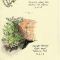 21-TT-juniper,-flowers
