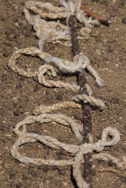 Outside I found these lovely bits of rope tied to a picket line.