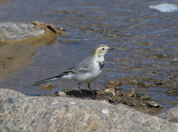We came down into a valley with a stream running through it and sometimes right in the road. Got this photo of a yellow wagtail.
