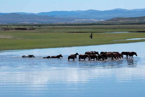 A last photo op...horses crossing a river!