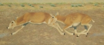 "On the Run (triptych 2) oil 16x36"""