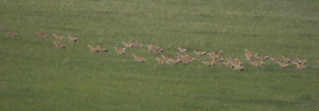 gazelle header