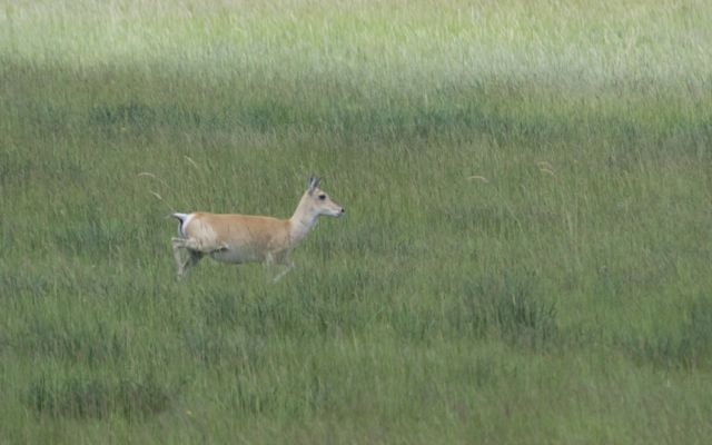 gazelles 2
