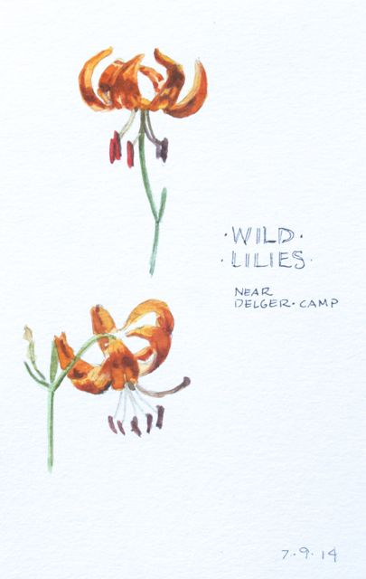 Lily studies, Delger Camp