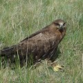 1 B-TH en route eagle