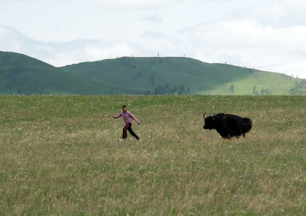 One of the drivers got a little to close to this yak and had to run for it. The other drivers loved it.