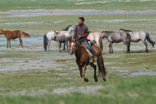 Then this local herder rode by...