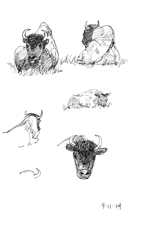 Bison sketches; Sakura Micron .01 pen