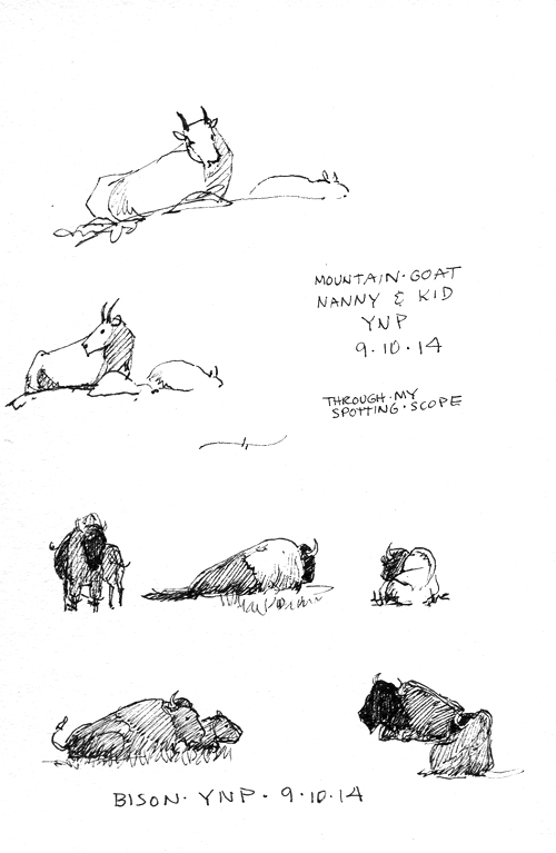 Mountain goat nanny and kid; bison; Sakura Micron .01 pen