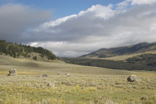 Yellowstone scenery.