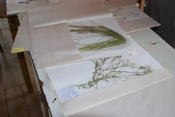 Batmunkh showed us part of a large collection of botanical specimens.