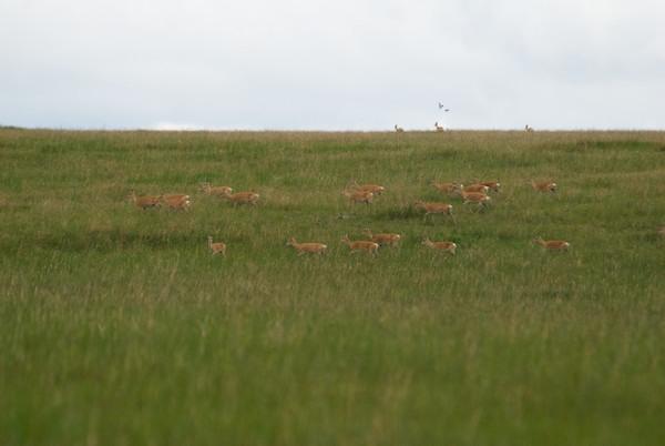One last herd.