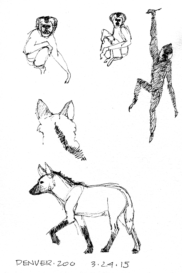 Colobus monkeys, maned wolf