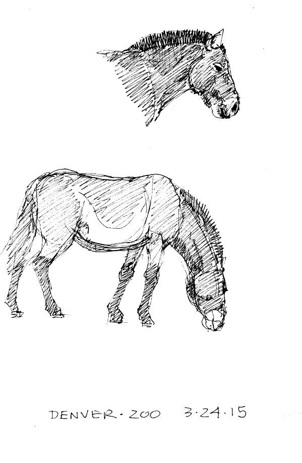 The zoo has a small group of takhi/Przewalski's horses and of course I had to sketch them. I also shot some video.
