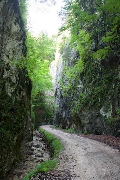 19 zarnesti gorges