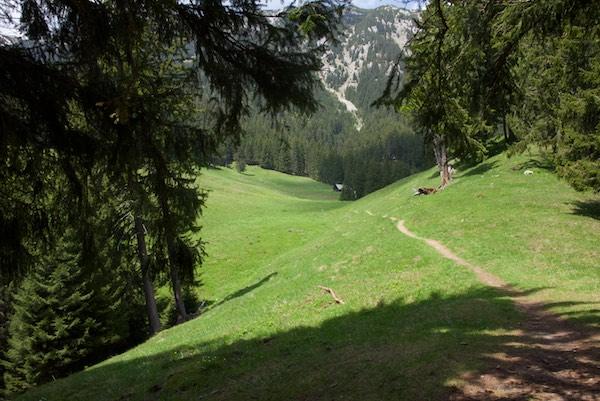 21 trail grass