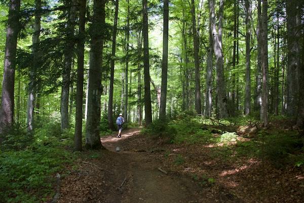 21 trail trees