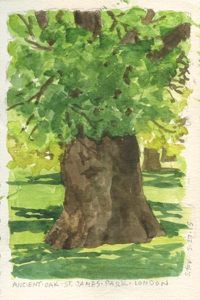 Ancient oak tree, St. James Park