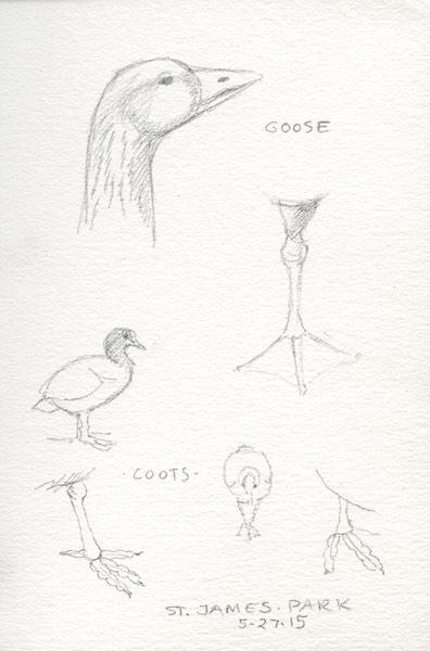 Pencil sketches of birds