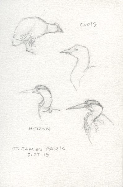 Pencil sketches of birds