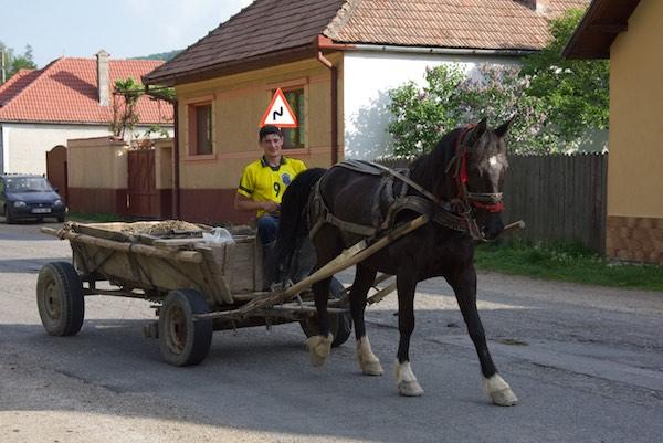 28 horse cart