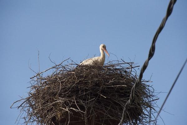 29 stork