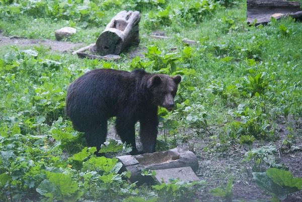 35 bear 3