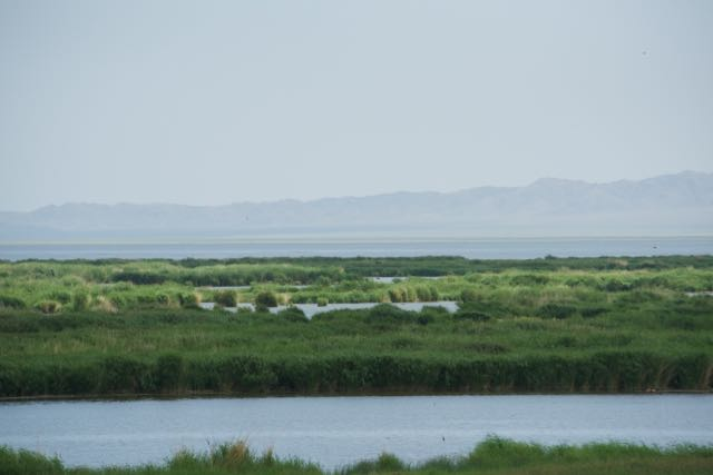 Khar Us Nuur reedbeds; we stopped here for lunch