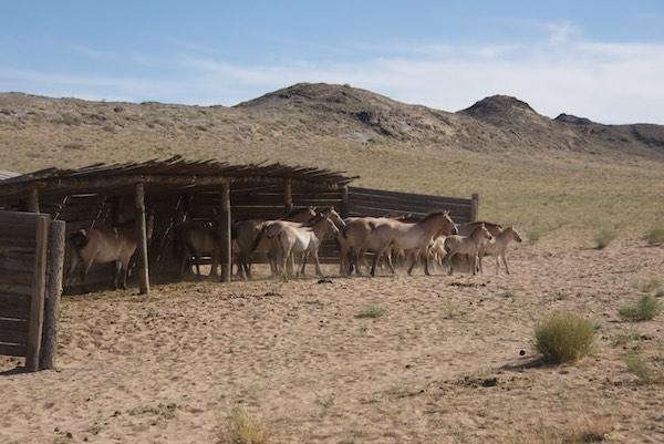 KT takhi shed
