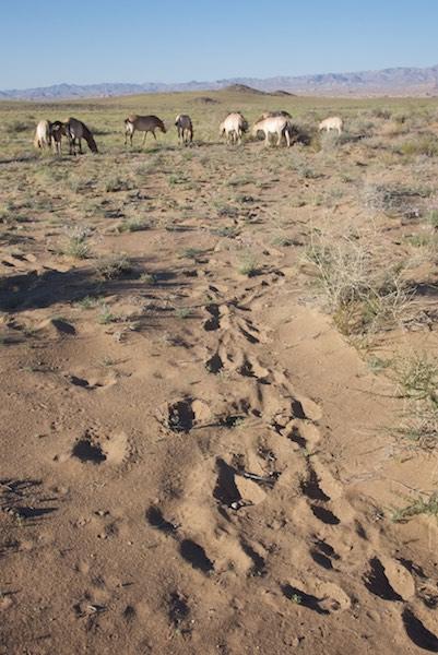 Hoofprints