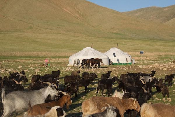 Herder's ger